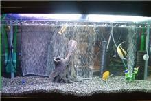熱帯魚生活