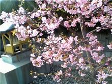 弥生3月、春です