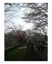 桜見物に木次へ