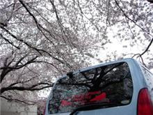 桜吹雪の入園式