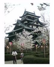 松江城山へ花見に