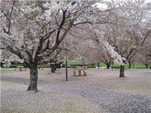 散桜・・・