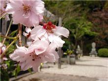 長谷寺と奈良公園