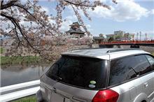 今更ながら桜の写真をアップ