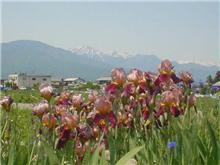山と花が綺麗でした(^_^)