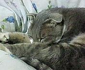 久々に我が家の猫