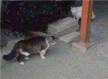 作業場は野良猫の溜まり場(~_~)