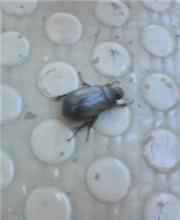 夏間近昆虫の息吹