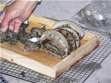 海女小屋体験料理