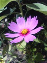 咲きました♪-2