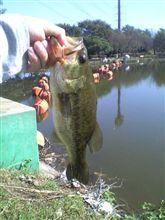 釣り場より
