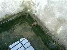 井の中の蛙?ヾ(* ̄  ̄)o
