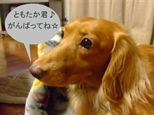 """<span style=""""font-size:20px;line-height:130%;"""">いざ、関ヶ原へ!</span>"""