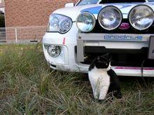 今日は、洗車ニャン