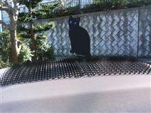 猫対策グッズ導入