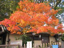 京都の紅葉ですが、これは綺麗でしょ!
