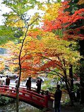 ♪すっかり紅葉です(^^)