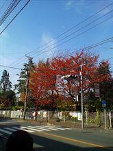 東京もすっかり秋(*・・*)♪
