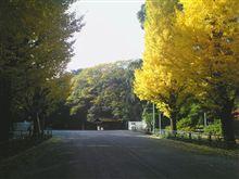 秋深し~銀杏