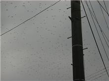 新潟の空は晴れてます、でもなぜかポタポタと・・・