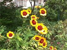 おはよう・・名古屋は、雨上がりの朝・・曇り・・日中最高気温34℃です・・・