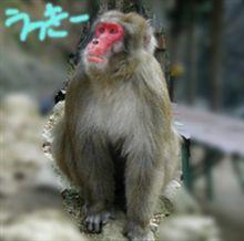箕面の猿 -FX回顧録-