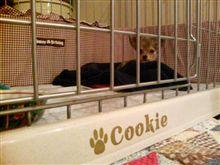 クッキーの表札☆