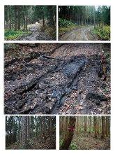 誰も来ない山林での格闘
