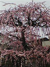 春がきた・・春がきた・・・KMKにきた