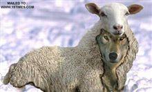 こっこれは羊の皮を被った狼なのか?!?!?
