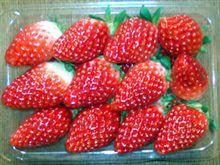 地元産のイチゴ