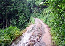 大自然を体で体験出来るスリル満点な国道 303号線・・・。
