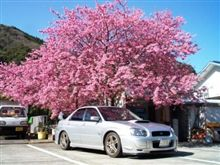 河津桜の旅