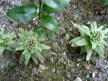 我が家の草花:その2 その後