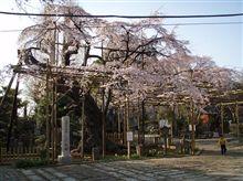 2007桜の花見第1弾♪