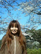 桜吹雪の~