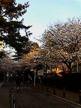神奈川の夜