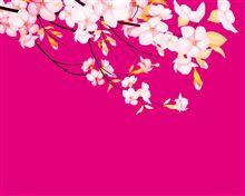 桜は、簡単には散りません!!