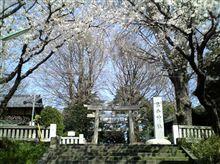 葛飾の神社の桜