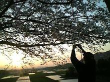 仕事帰りに・・桜2