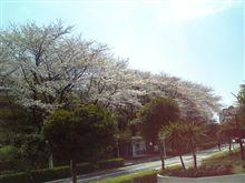今日は花見!