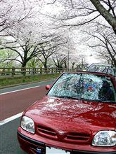 桜・桜・桜(^^)