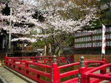 花見 紀三井寺(関西早咲きNo.1)