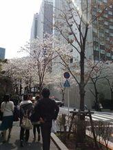 生存証明と桜