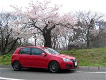 寒いけど桜満開