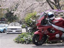 もう桜も終わりの時期