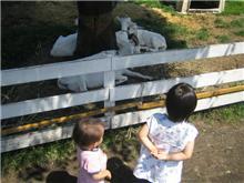 2005 夏 河口湖ツアー(動物達)