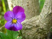 花の写真 39