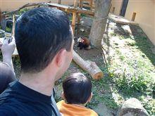 有名なレッサーパンダを見に行った!