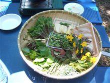 今日は山菜天ぷらパーティ